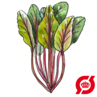 Bladbede-rhubarb