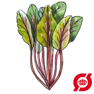 Image of   Bladbede, rød (øko)