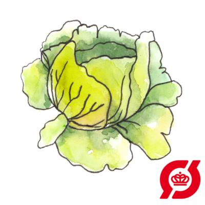 Image of   Iceberg salat - frø (øko)