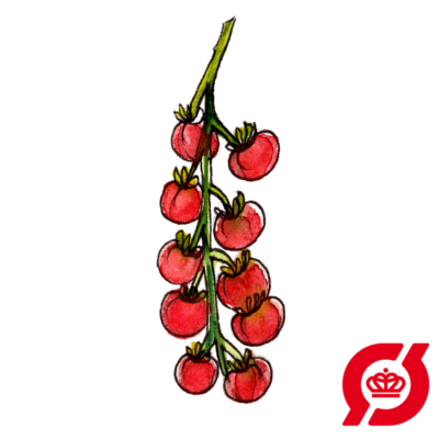 Image of   Tomat - frø (øko)