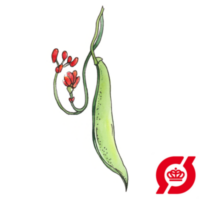 pralbønne-ladydi