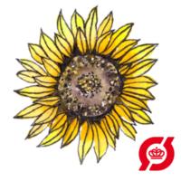 solsikke-oko
