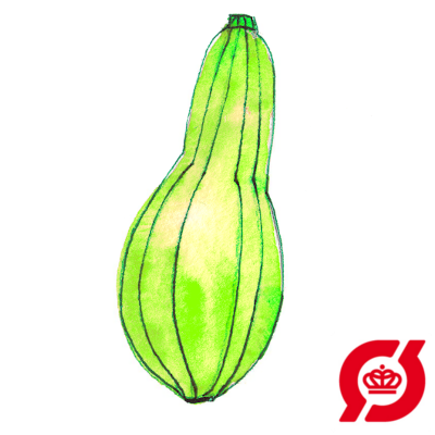 Image of   Squash, grøn - plante (øko)